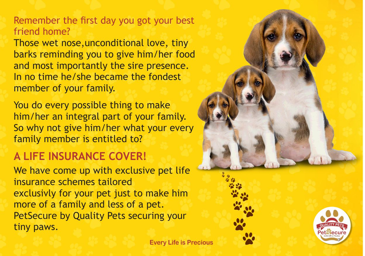 Love your pets by insuring them,says Jigyasu Kothari,Founder,Quality Pets